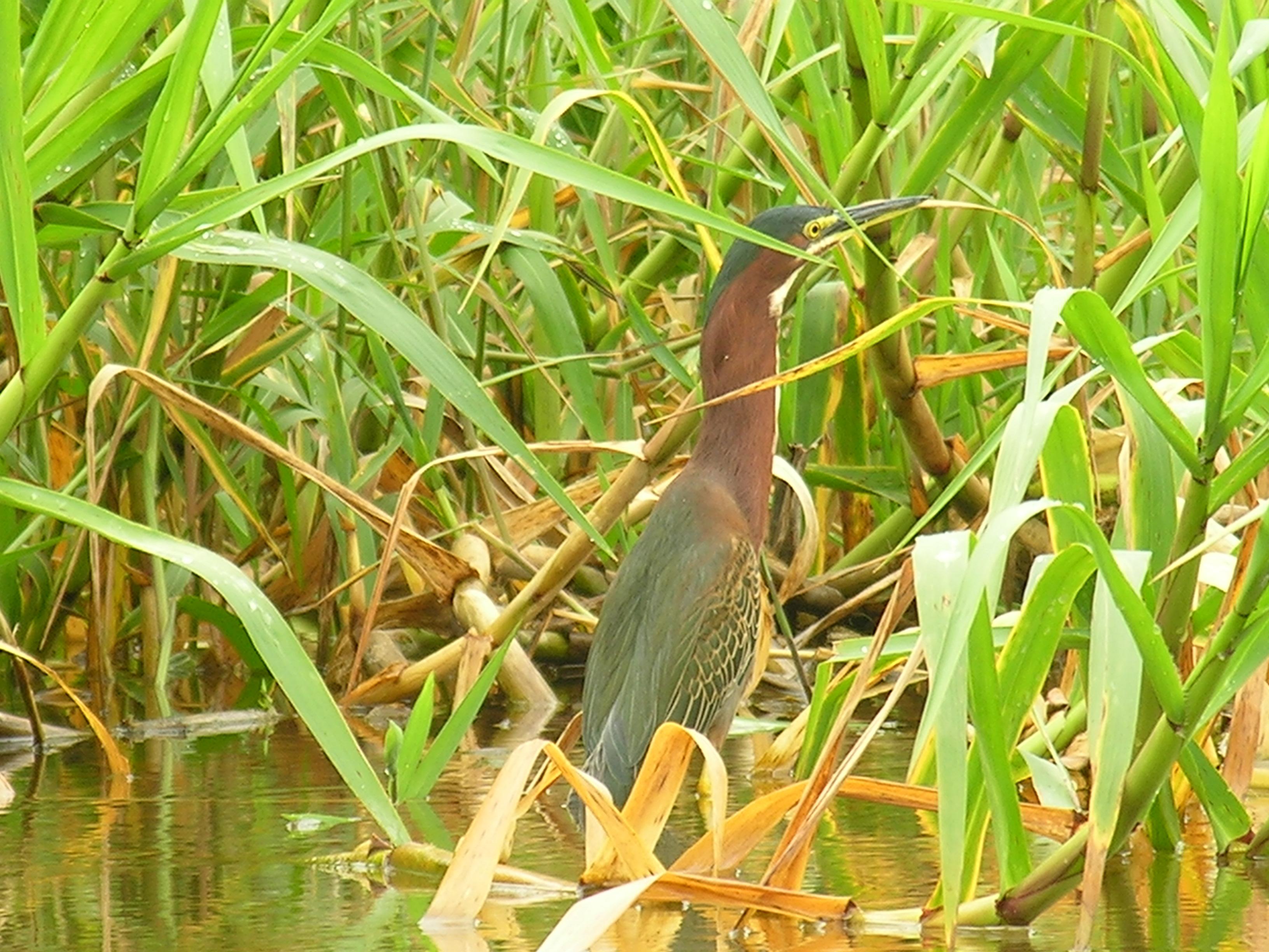 Bird near River San Juan in Nicaragua