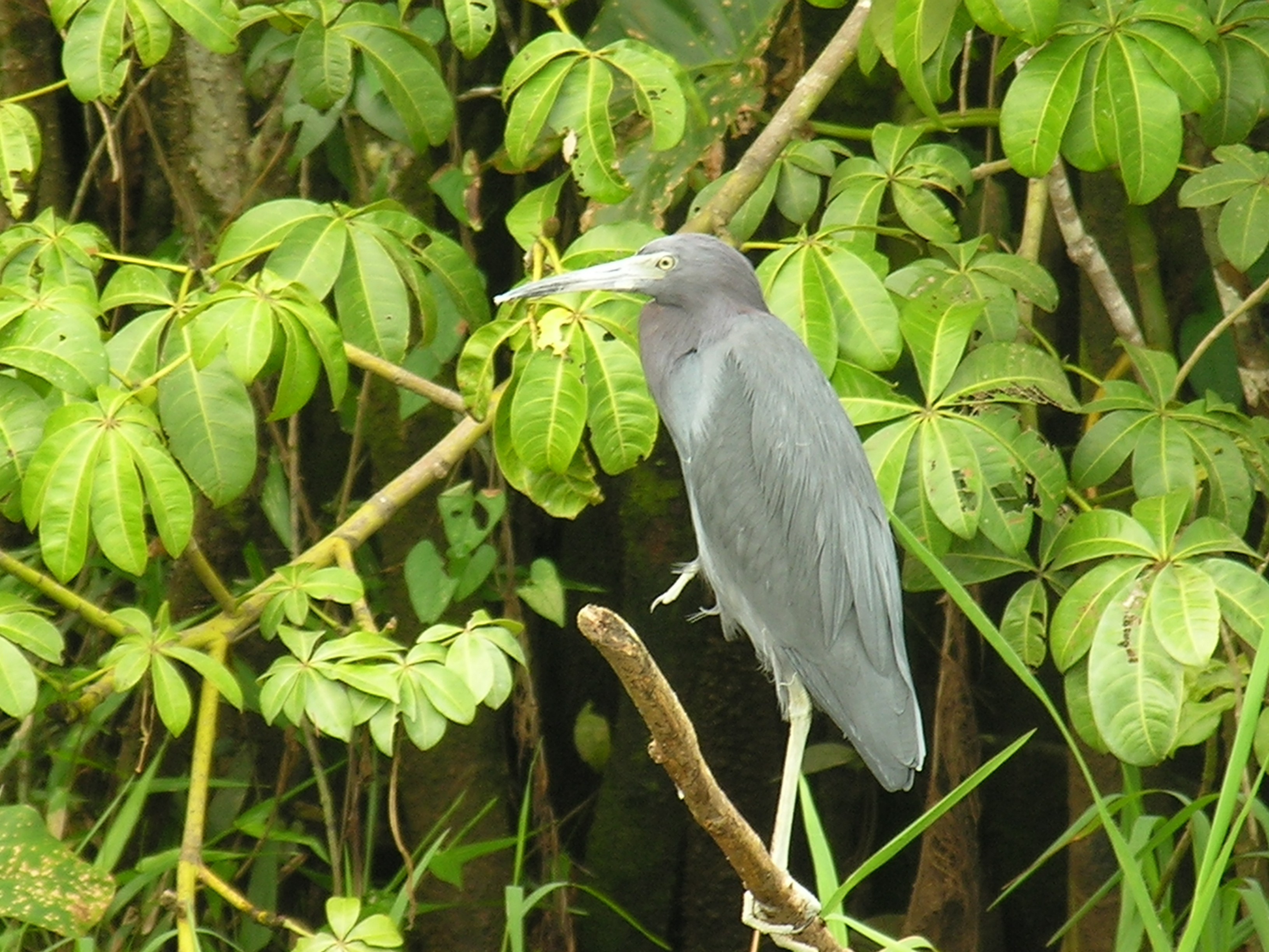 Birdwatching Tour in Nicaragua