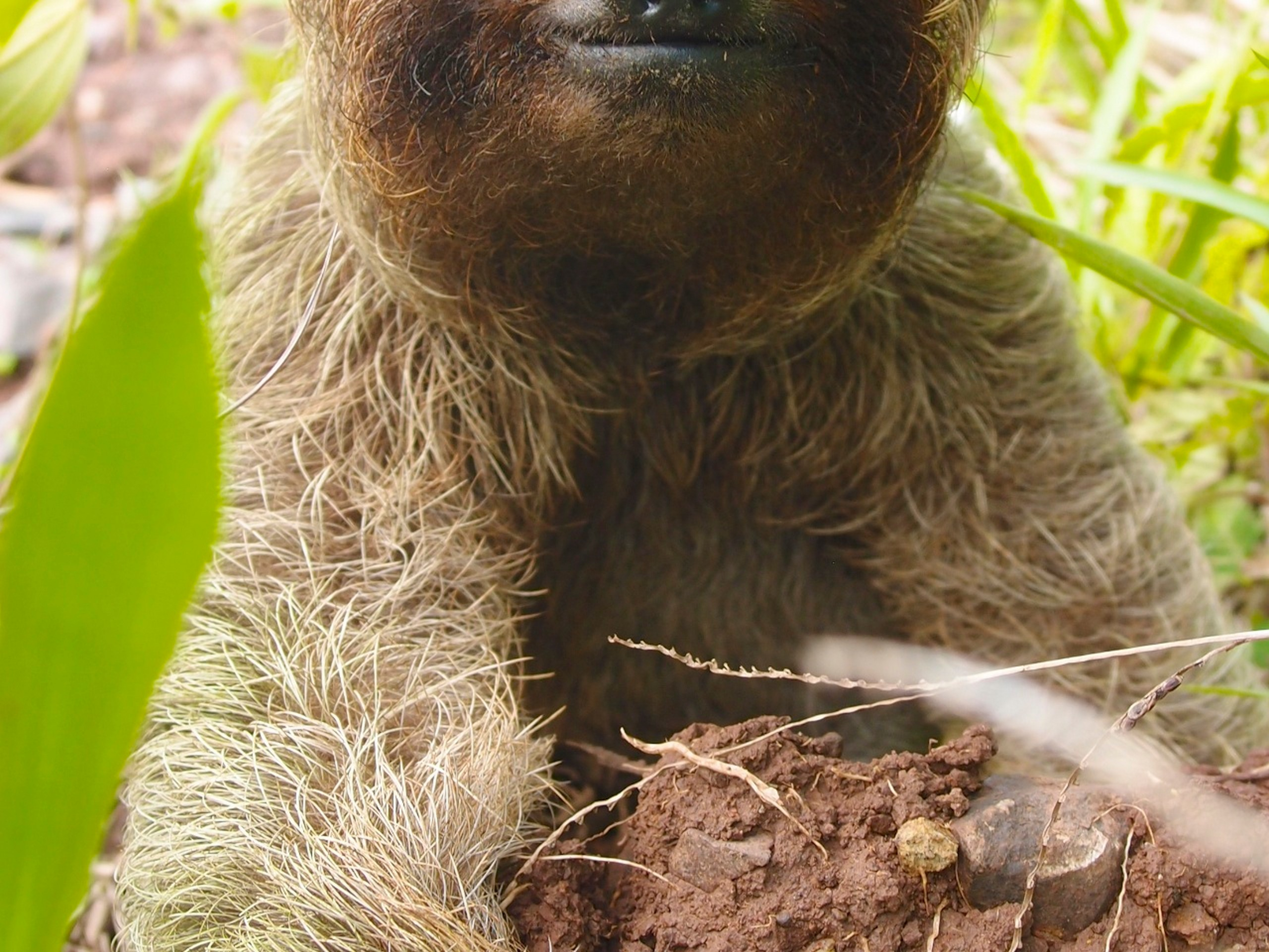 Sloth met on Family Tour in Nicaragua