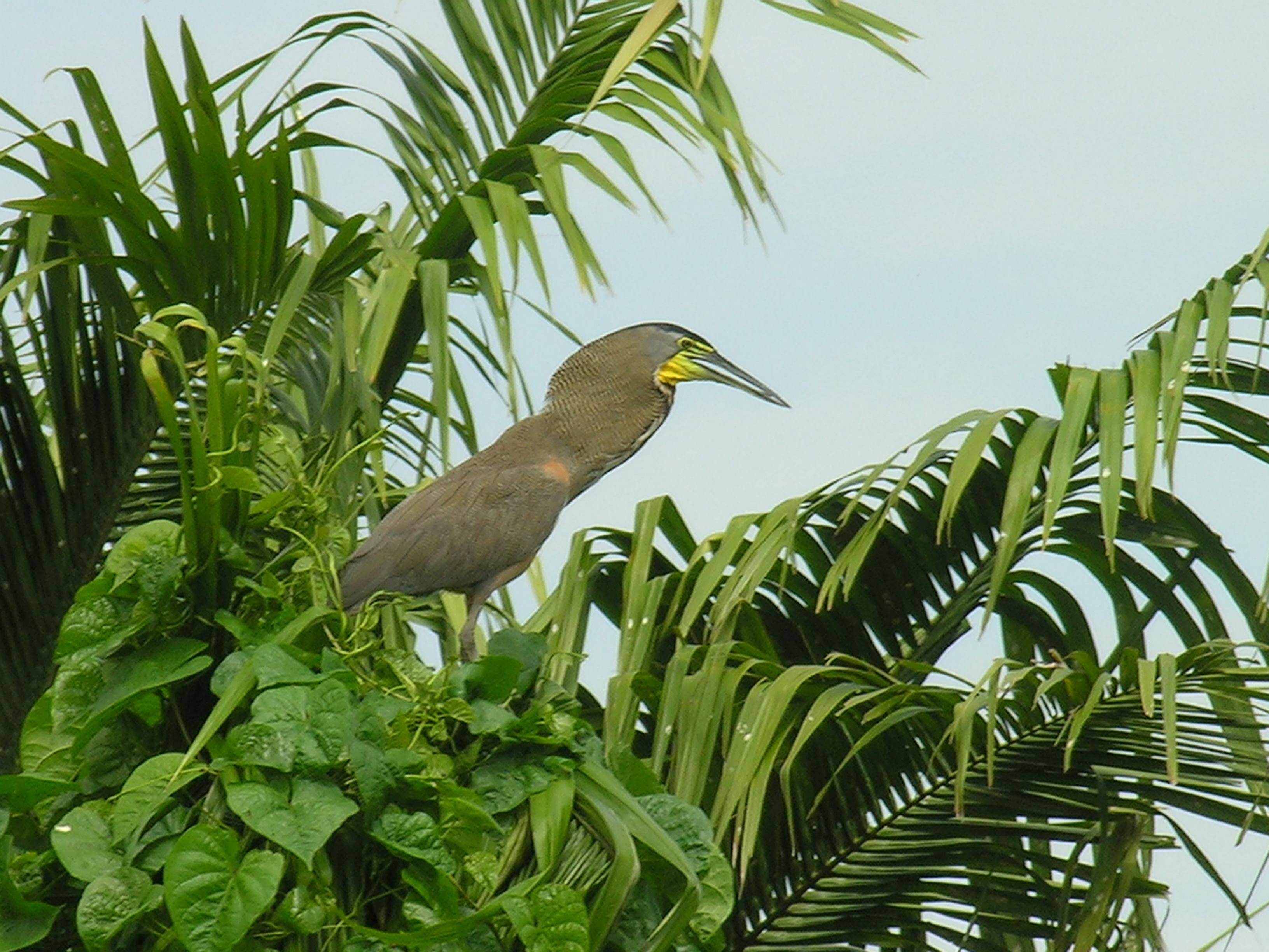 Bird in Nicaragua