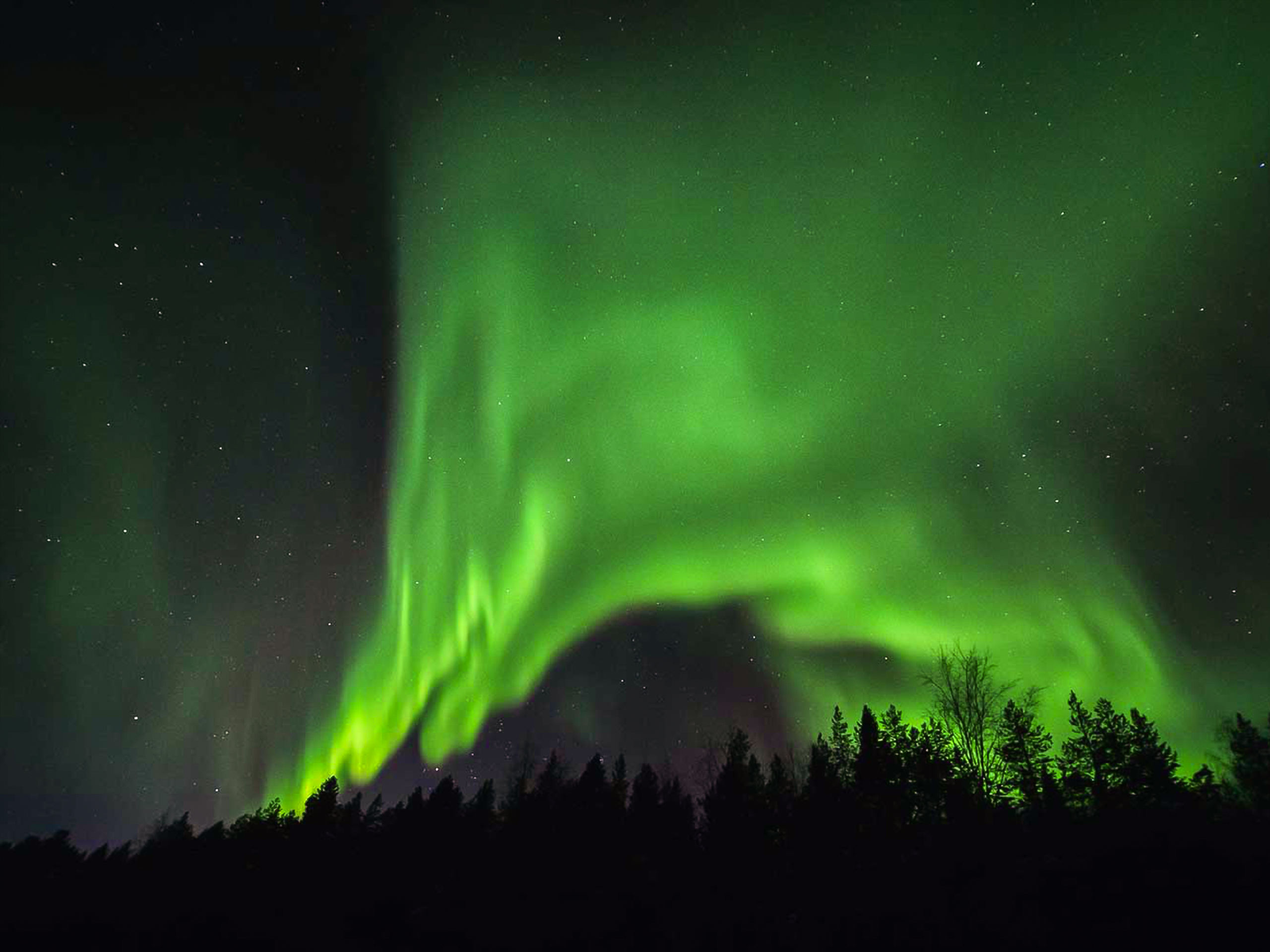 Northern Lights above the Forest