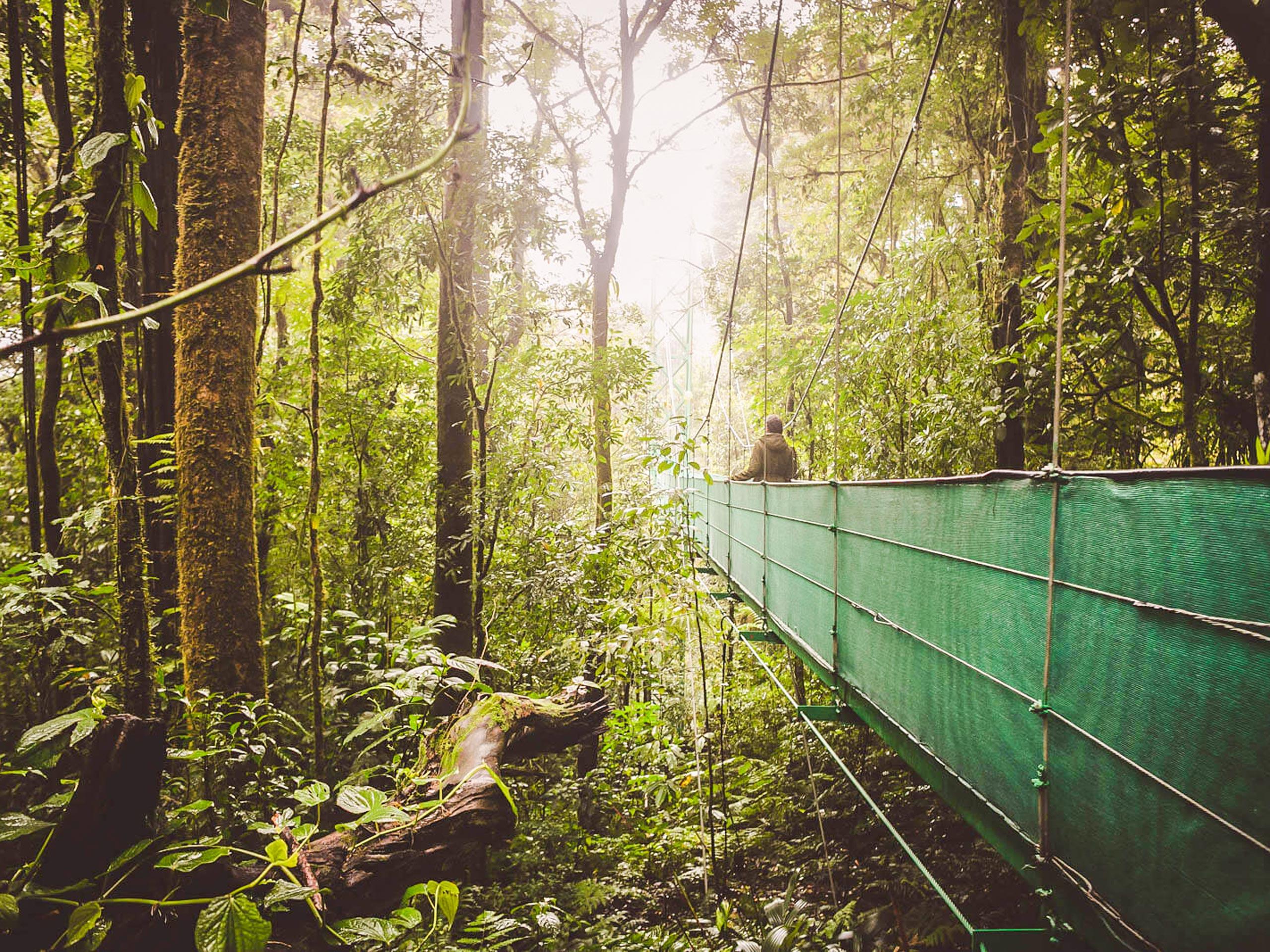 Sky walk on the hanging bridge in Monteverde