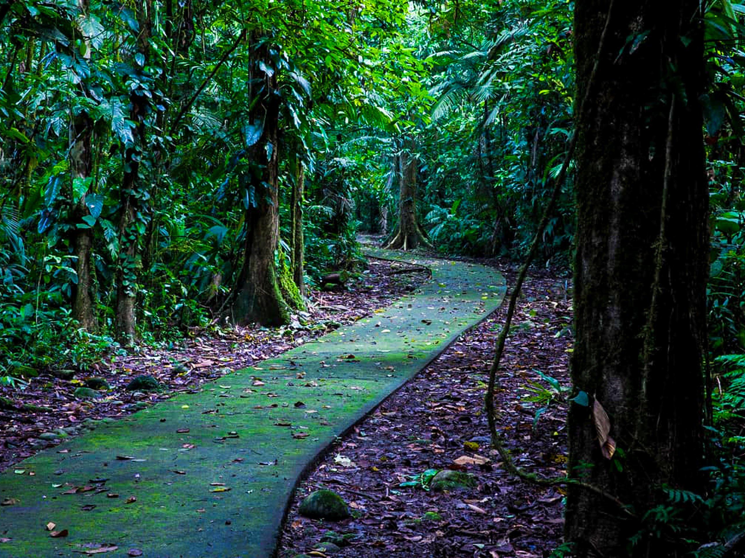 La Selva Biological Station tropics path