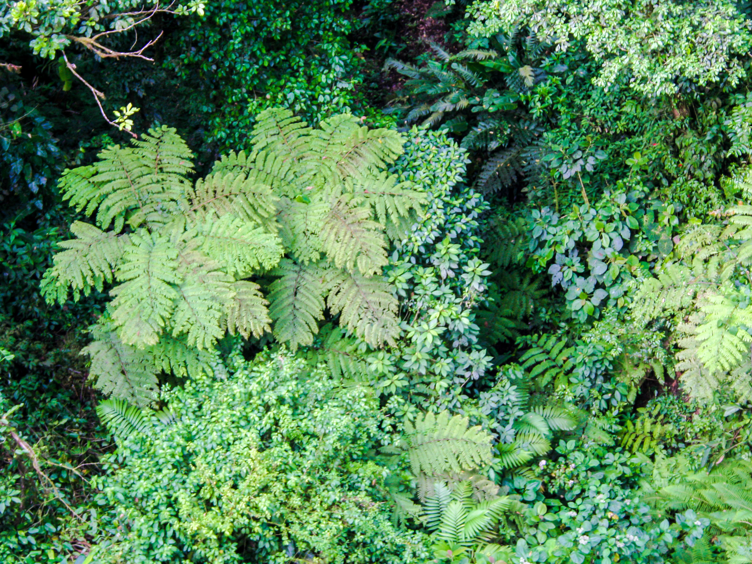 Beautiful tropical forest flora