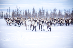 Yamal Peninsula Cultural Experience Tour