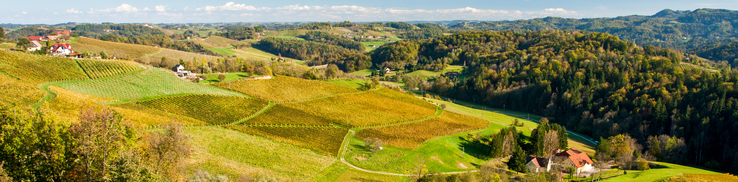 Walking the Vineyards, Caves, and Coasts of Slovenia