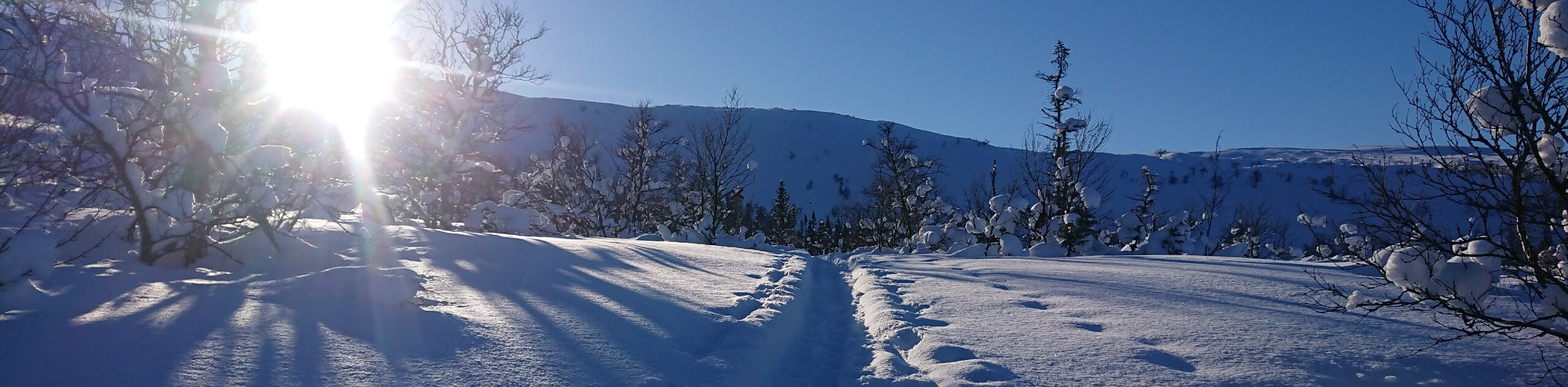 Cross-Country Skiing in the Heart of Sweden